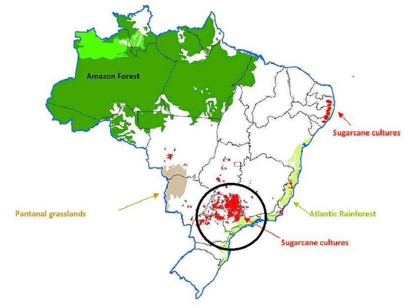 brazil sugarcane plantations