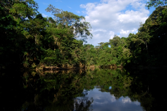Yasuni Lake